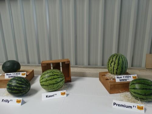 Watermelon Business Event for Experts de Nunhems en El Ejido